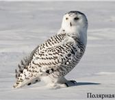 Изображение в Домашние животные Птички Реализация птиц разного возраста для Ручных в Владикавказе 0