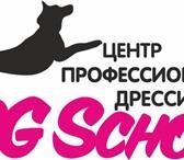 Изображение в Домашние животные Услуги для животных ДРЕССИРОВКА СОБАК в Центре Профессиональной в Чите 300