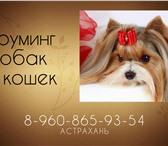 Фото в Домашние животные Услуги для животных Грумер и заводчик профессионального питомника в Астрахани 0