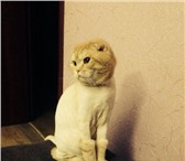 Изображение в Домашние животные Услуги для животных Хочу предложить вам дорогие клиенты стрижки в Самаре 600