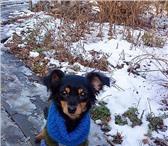 Фотография в Домашние животные Отдам даром отдам в ДОБРЫЕ руки маленькую собачку , девочка-3 в Красноярске 1