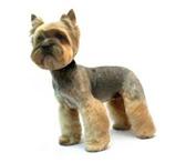 Foto в Домашние животные Стрижка собак Предлагаю услуги грумера. Без боли, усыпления в Челябинске 300