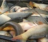 Фотография в Хобби и увлечения Рыбалка Рыбалка платная. Отдых. 300 руб. сутки. Гидропланктон в Пензе 300
