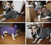 Foto в Домашние животные Товары для животных три костюма, мало бу, т.к. выросли, возможен в Ярославле 1500