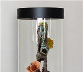 Изображение в Домашние животные Рыбки Пропускание видимого Света - 95%Объем аквариума- в Екатеринбурге 14700