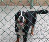 Фото в Домашние животные Услуги для животных Рады Вам предложить передержку собак мелких в Таганроге 300