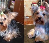 Фото в Домашние животные Стрижка собак Сертифицированный грумер предлагает комплекс в Рязани 699