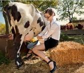 Фото в Домашние животные Корм для животных В животноводстве, для повышения конверсии в Ростове-на-Дону 1