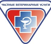 Foto в Домашние животные Услуги для животных ООО Грифон. Вызов ветврача на дом с 10 до в Новосибирске 500
