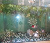 Изображение в Домашние животные Рыбки Продам аквариум 35 литров к нему прилагаются в Братске 3000