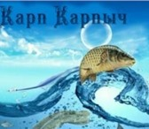 Изображение в Домашние животные Рыбки Предлагаем живую рыбу для зарыбления водоемов: в Санкт-Петербурге 0
