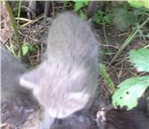 Изображение в Help! Разное Найдены кошка с 4 котятами,котята на вид в Нижнем Новгороде 0