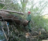 Изображение в Строительство и ремонт Ландшафтный дизайн Возможно несколько способов удаления дерева: в Краснодаре 1000