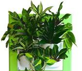Foto в Домашние животные Растения • Фитокартины Flowall• Встроенная система в Санкт-Петербурге 5400