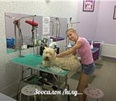 Изображение в Домашние животные Стрижка собак Зоосалон Лилу, предлагает своим клиентам в Обнинске 1000