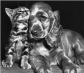 Фотография в Хобби и увлечения Коллекционирование Для Вас Психологическая консультация по почте. в Протвино 400
