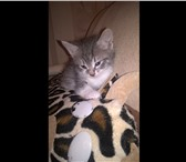 Фото в Домашние животные Отдам даром Есть 4 котенка (рыжий, серый, рыжий с белым, в Нижнем Новгороде 0