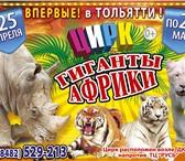 Фото в Развлечения и досуг Цирк Впервые в Тольятти единственный в мире дрессированный в Тольятти 400