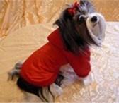 Фото в Домашние животные Одежда для собак Одежда для собак в интернет ателье-магазине в Владимире 1500