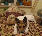 Фотография в Домашние животные Потерянные 18 июля 2010года потерялся пес в городе тосно в Тосно 0