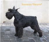 Изображение в Домашние животные Стрижка собак Стрижка собак, кошек! Зоосалон с выездом в Москве 2000