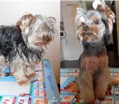 Фотография в Домашние животные Услуги для животных Стрижка собак всех пород. Выезд к вам на в Краснодаре 0