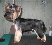 Foto в Домашние животные Стрижка собак Cтрижка, тримминг, мытье и укладка шерсти в Москве 0