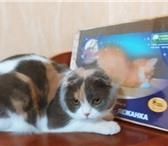 Foto в Домашние животные Товары для животных Когтеточка - лежанка «Когтедралка домашняя» в Волгограде 300