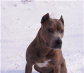 Foto в Домашние животные Корм для животных Предлагаем профессиональные корма для собак, в Омске 0