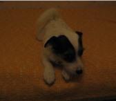 Изображение в Домашние животные Найденные Найден терьер сука 10-12 месяцев. Ждет любящих в Москве 0