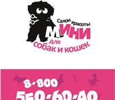 Фото в Домашние животные Услуги для животных Мы оказываем спектр услуг для животных - в Владимире 850