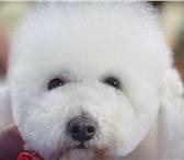 Изображение в Домашние животные Услуги для животных Мастер с большим стажем окажет вам услуги в Саратове 0