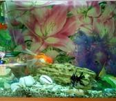 Изображение в Домашние животные Рыбки Продам аквариум в использовании 2 года. толщина в Красноярске 12500