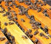 Изображение в Домашние животные Другие животные Отличные пчелопакеты за Разумные деньги! в Кургане 2800
