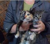 Foto в ? Отдам даром-приму в дар котята,возраст 2 месяца, 3 мальчика и 1 девочка, в Смоленске 1