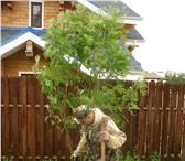 Foto в Строительство и ремонт Ландшафтный дизайн Посадим красивые деревья и кустарники, с в Москве 20000