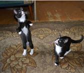 Фотография в ? Отдам даром-приму в дар Отдаю двух хорошеньких котиков, 3 месяца, в Владимире 0