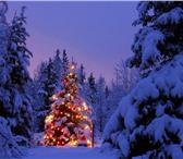 Фото в Отдых и путешествия Туры, путевки Новогодние каникулы на АлтаеЭкскурсионный в Омске 38700