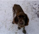 Foto в Домашние животные Найденные Найдена собака старый пост ГАИ в районе ГРЭС. в Новомосковске 0