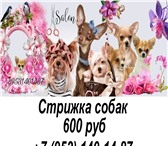 Фото в Домашние животные Услуги для животных Стрижка собак Колпино, Тосно, Шушары, Славянка, в Санкт-Петербурге 600