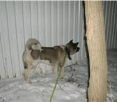 Foto в Домашние животные Услуги для животных Погуляю с Вашей собакой/собаками вместо Вас. в Москве 500