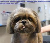 Foto в Домашние животные Стрижка собак Профессиональные груминг услуги (стрижка в Москве 1500